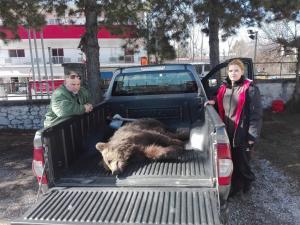 Νεκρό αρκουδάκι στην Κοζάνη – Το παρέσυρε αυτοκίνητο – Προσοχή, σκληρές εικόνες [pics, vid]