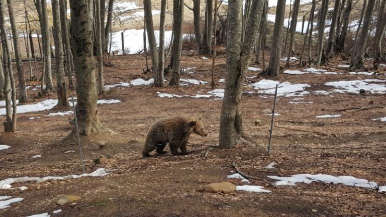 Μπαίνει η άνοιξη και ξύπνησαν οι αρκούδες