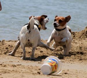 Νομοσχέδιο για τα ζώα συντροφιάς: Πανηγυρίζουν οι φιλοζωικές οργανώσεις για την απόσυρση!