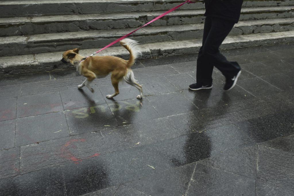 νομοσχέδιο για τα ζώα συντροφιάς