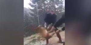 Κόνιτσα: Ζωντανό το σκυλάκι που βασάνισαν στρατιώτες – Ταυτοποιήθηκαν οι δράστες