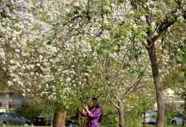 Απίστευτο! Επιστήμονες δημιουργούν νέα χρώματα λουλουδιών για να βοηθήσουν τον τουρισμό | Newsit.gr