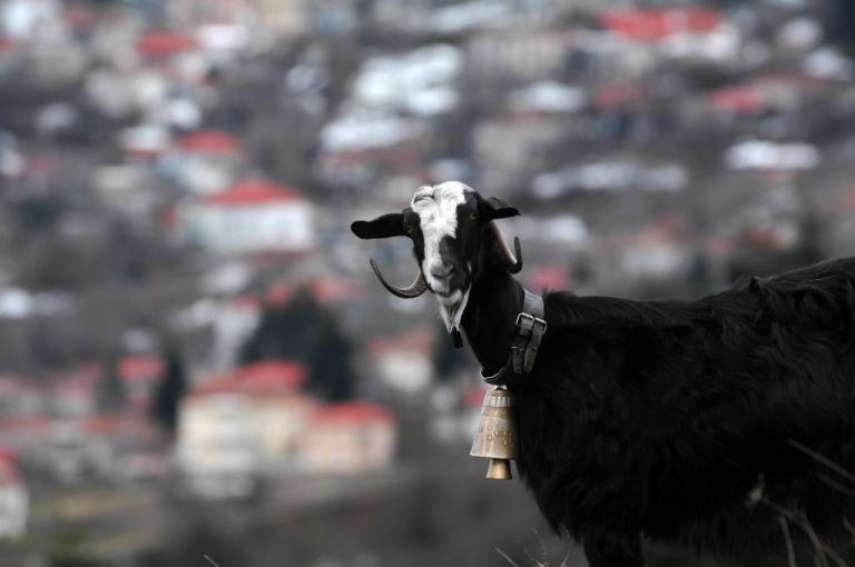 Είδε κατσίκες στην Κρήτη να… μασουλάνε κι έφτιαξε κάτι που κανείς δεν φανταζόταν | Newsit.gr
