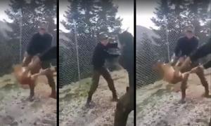 Κόνιτσα: Αγνοείται η τύχη του σκύλου που βασάνισαν οι δύο φαντάροι