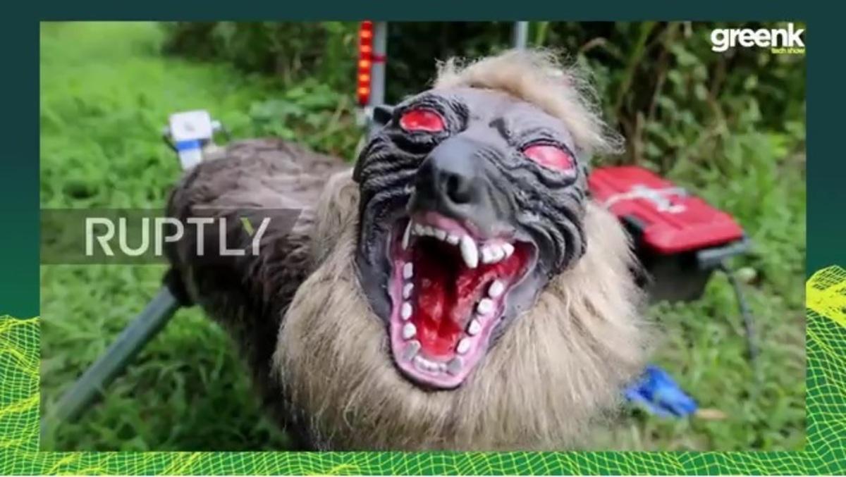 Λύκοι – ρομπότ βγαλμένοι από την… κόλαση! [vids] | Newsit.gr