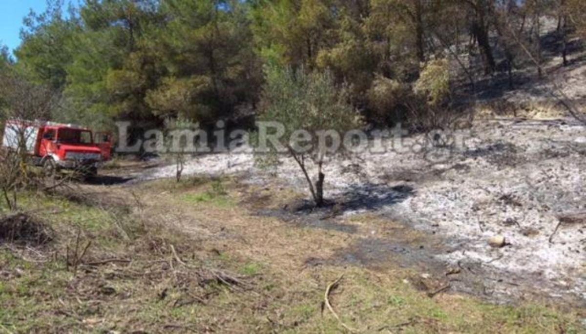 Φωτιά σε δασική έκταση στη Φθιώτιδα | Newsit.gr