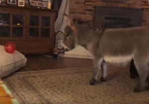 Μεγάλωσαν το μικρό γαϊδούρι σαν σκύλο και αυτό τώρα φέρνει πίσω μέχρι και το μπαλάκι