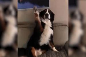 Η απίστευτη αντίδραση σκύλου που έκανε άνω κάτω το σπίτι – Το βίντεο ξεπερνά τις 11.000.000 προβολές