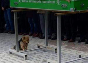 Ο «Χάτσικο» της Τουρκίας: Πηγαίνει κάθε μέρα στο σημείο που θάφτηκε το αφεντικό του