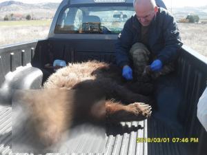 Αναγκαία η τοποθέτηση φράχτη σε σημείο της Εγνατίας Οδού που έχουν σκοτωθεί 4 αρκούδες