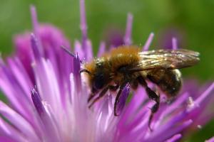 Άργος: Έπεσε νεκρός από τσίμπημα μέλισσας – Είχε κάνει ένεση που δεν αποδείχθηκε σωτήρια!