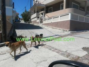Λέσβος: Εφιάλτης για γυναίκα από επίθεση αδέσποτου σκύλου – Οι εικόνες που προβληματίζουν [pics]