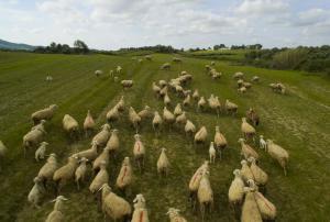 Πήλιο: Σκότωσε 3 πρόβατα για να εκδικηθεί τη γειτόνισσά του – Η απόφαση του δικαστηρίου!