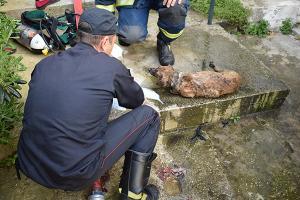 Καβάλα: Σκληρές εικόνες από διάσωση σκύλου – Έτσι τον έβγαλαν από το φλεγόμενο σπίτι [vid]