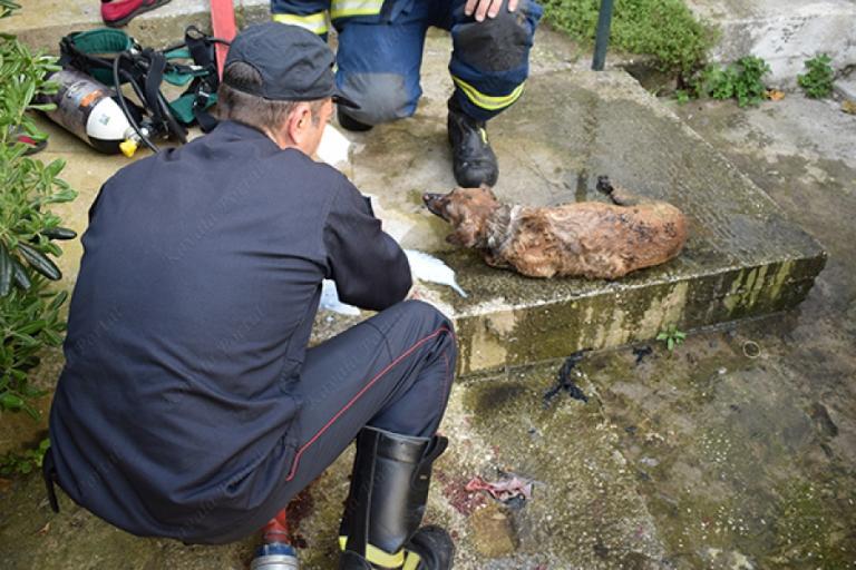 Καβάλα: Σκληρές εικόνες από διάσωση σκύλου – Έτσι τον έβγαλαν από το φλεγόμενο σπίτι [vid] | Newsit.gr
