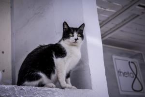 Χίος: Σκότωσε με πέτρες μια γάτα που έψαχνε φαγητό για τα μωρά της – Οργή για τον δράστη!