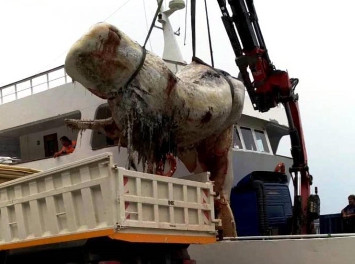 Σαντορίνη: Άνοιξαν το στομάχι της τεράστιας φάλαινας και προσπαθούσαν να πιστέψουν στα μάτια τους [pics, vid] | Newsit.gr