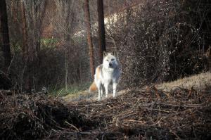 Αγέλη λύκων επιτέθηκε σε πρόσφυγες στα Ιωάννινα