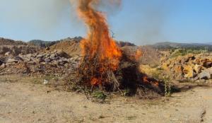 Κρήτη: Έκαψαν πάνω από 20 κιλά κάνναβης