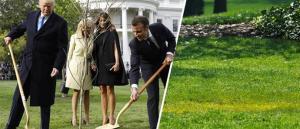 "RIP βελανιδιά! O Τραμπ ""ξερίζωσε"" το δέντρο που φύτεψε με τον Μακρόν! [pics]"