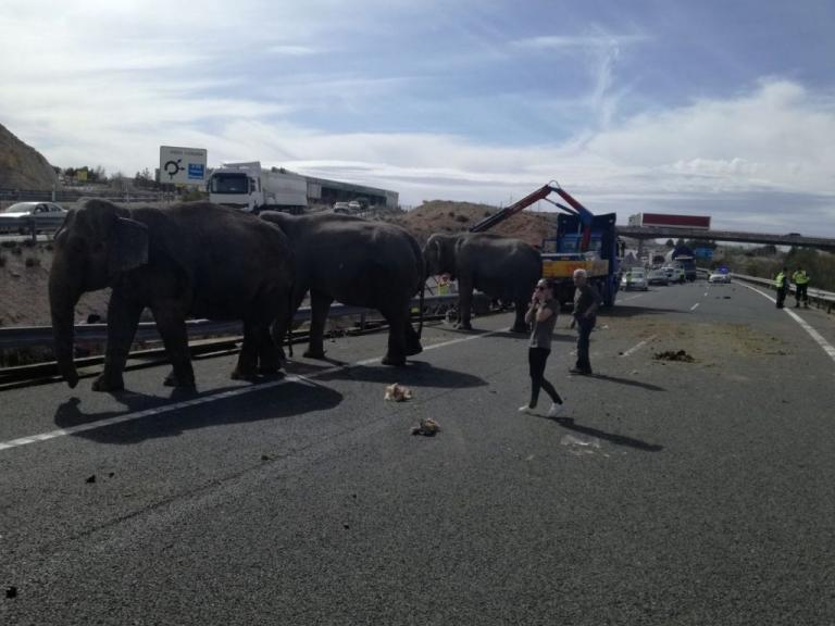 Τροχαίο με νεκρούς ελέφαντες στην Ισπανία [pics]   Newsit.gr