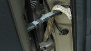 Κρήτη: Φίδι τρύπωσε σε αυτοκίνητο με μητέρα και μωρό! [pic]