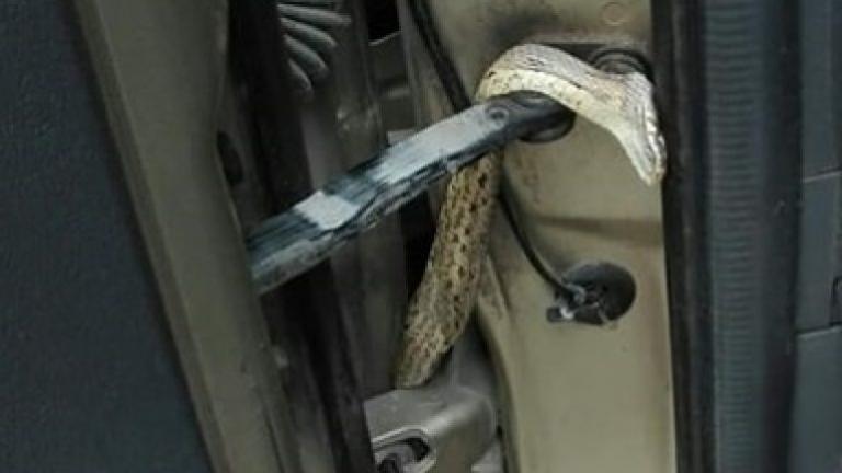 Κρήτη: Φίδι τρύπωσε σε αυτοκίνητο με μητέρα και μωρό! [pic] | Newsit.gr