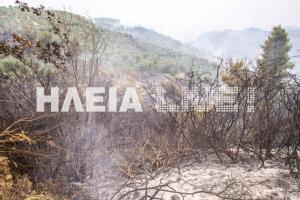 Ηλεία: Καλύτερη η κατάσταση στη φωτιά της Φρίξας
