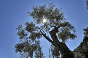 Καιρός: Καλοκαιρινή Δευτέρα – Το θερμόμετρο θα φτάσει τους 27 βαθμούς Κελσίου
