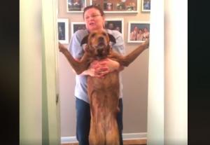Σκυλιά ζουν τον χειρότερό τους εφιάλτη: Το μπάνιο!