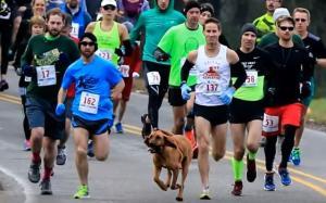 Σκύλος έκανε ντου σε αγώνα δρόμου και τερμάτισε έβδομος!