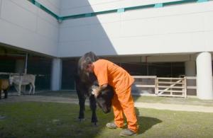 Κρατούμενοι φροντίζουν έναν ολόκληρο ζωολογικό κήπο