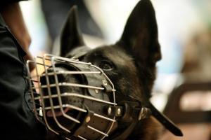 Λήμνος: Οι διαρρήκτες δεν πρόσεξαν την προειδοποιητική πινακίδα για τον σκύλο – Το μεγάλο λάθος τους!