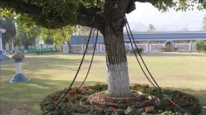 Απίστευτο: Συνέλαβαν… δέντρο πριν 120 χρόνια και ακόμα τελεί υπό κράτηση!