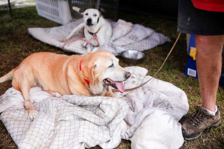 Δημιουργήθηκε «ηλεκτρονικός σκύλος διάσωσης» με οσφρητική ικανότητα | Newsit.gr