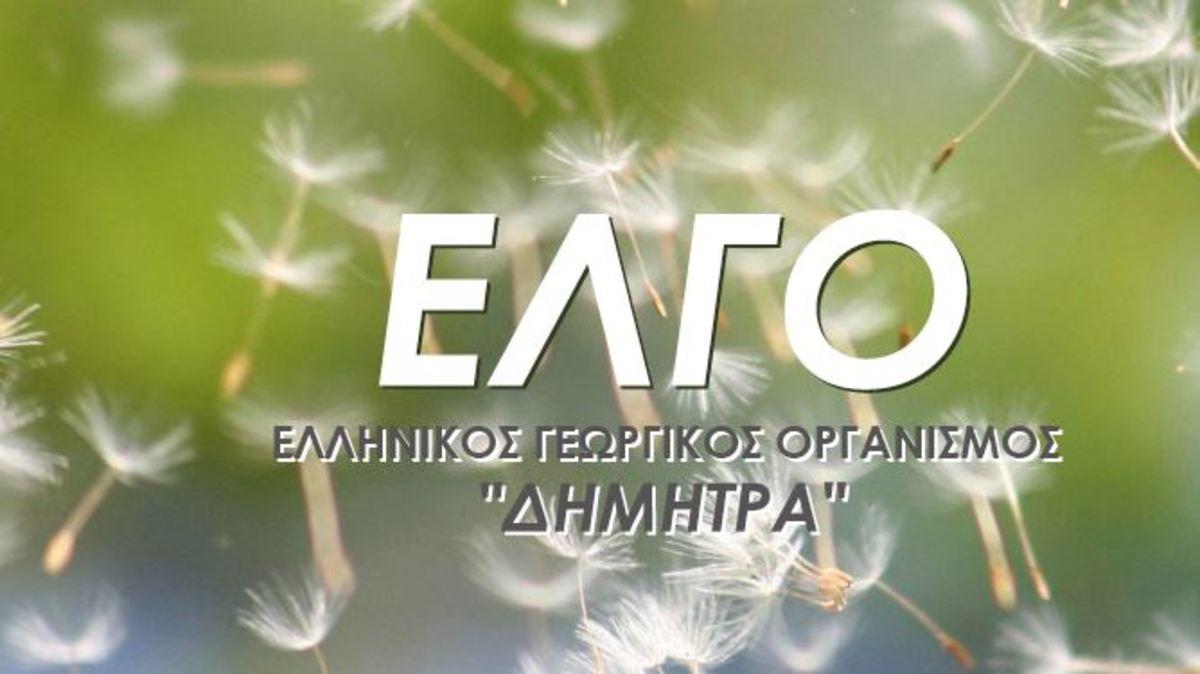 Νέος πρόεδρος του ΕΛΓΟ – ΔΗΜΗΤΡΑ ο Νίκος Κατής – Διευθύνων σύμβουλος ο πρώην διοικητής του ΕΦΚΑ | Newsit.gr