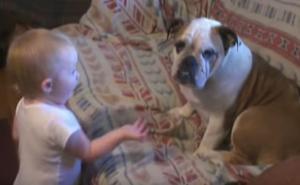 Μωρό μαλώνει με σκύλο και εκείνος δεν ξέρει τι του γίνεται