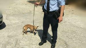 Θύμισε… «Χάτσικο»! Συγκινεί ο σκύλος της 75χρονης που βρέθηκε νεκρή στην Ηλιούπολη