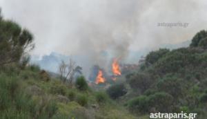 80 στρέμματα αποτεφρώθηκαν στη Χίο [pics]
