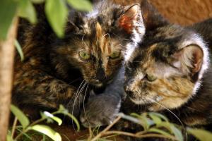 Καλαμάτα: Έκλεισε 3 γατάκια σε κάδο σκουπιδιών – Πάγωσε μόλις άκουσε την απόφαση των δικαστών!