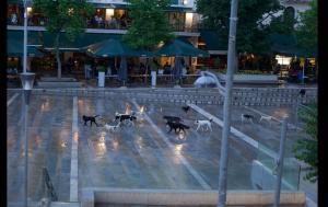 Κοζάνη: Το απόγευμα που τα αδέσποτα σκυλιά έγιναν «αφεντικά» της πλατείας – Οι επίμαχες εικόνες [pics]