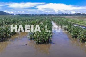Ηλεία: Απελπισία μετά τις πλημμύρες – Βυθίστηκαν καλλιέργειες μέσα σε λίγα λεπτά – Αγωνία για τις αποζημιώσεις [pics]