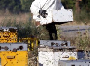 Σάμος: 70χρονος κατηγορείται για 40 κλοπές μελισσιών!