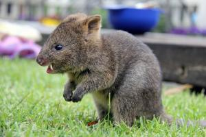 Αυτό είναι το πιο χαρούμενο ζώο στην Γη! Αυξάνεται και πληθύνεται ο πληθυσμός του