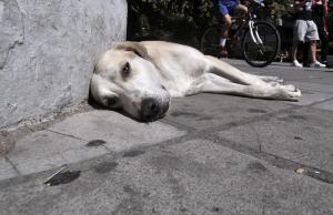 Δοχεία δροσιάς σε 39 σημεία για τα αδέσποτα της Αθήνας