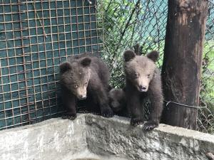 """Πέντε ορφανά αρκουδάκια βρίσκονται πλέον στο καταφύγιο του """"Αρκτούρου"""""""