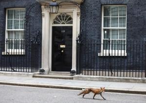 Foxy Lady! Τι έκανε η αλεπού στην Downing Street;