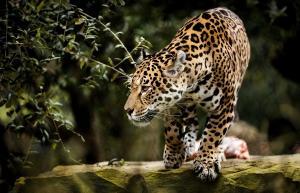 Λήξη συναγερμού στη Γερμανία: Βρέθηκαν κι αιχμαλωτίστηκαν τα ζώα που δραπέτευσαν από ζωολογικό κήπο