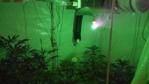 Δυο συλλήψεις στο Αιγάλεω για καλλιέργεια ναρκωτικών [pics, vid]