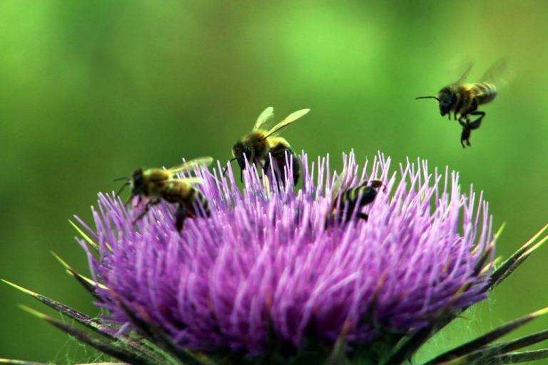Μέλισσες με… «μαθηματικό» μυαλό – Το πείραμα, το μηδέν και το απίστευτο εύρημα | Newsit.gr